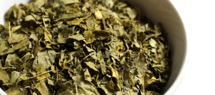 Is Moringa Tea Good for Diabetes