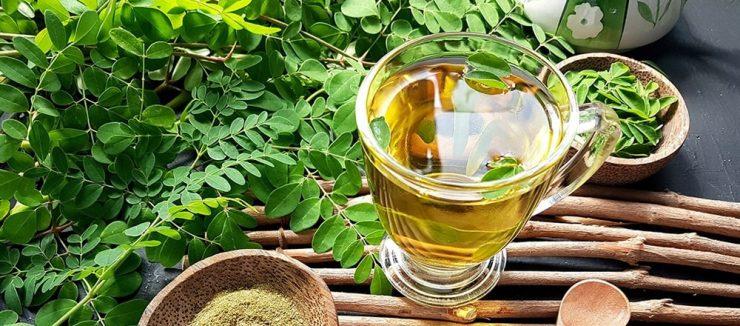 Moringa Tea Side Effects