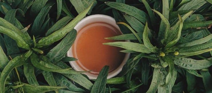Lemon Balm Tea Benefits Weight Loss