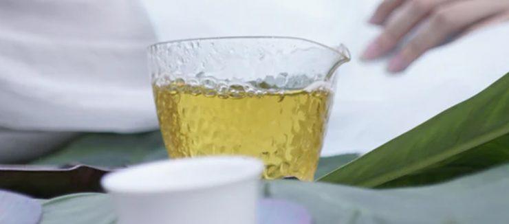 Lemon Balm Tea and Pregnancy