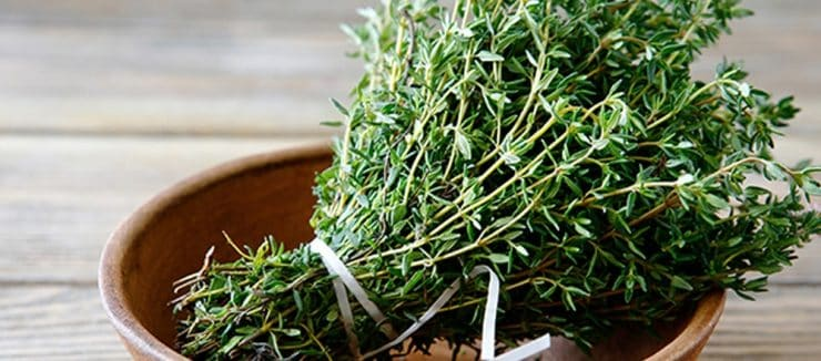 Thyme Tea for Weight Loss