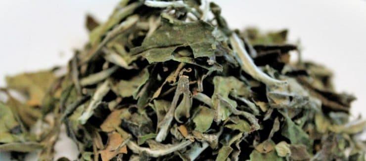 Echineacea Tea While Pregnant