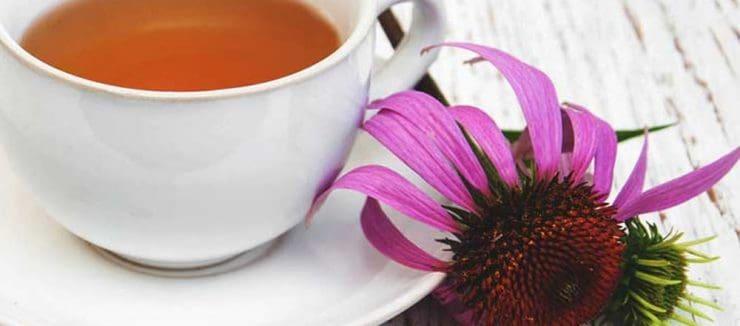 Echinacea Tea Benefits