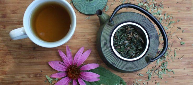 Echinacea Tea Benefits for Skin