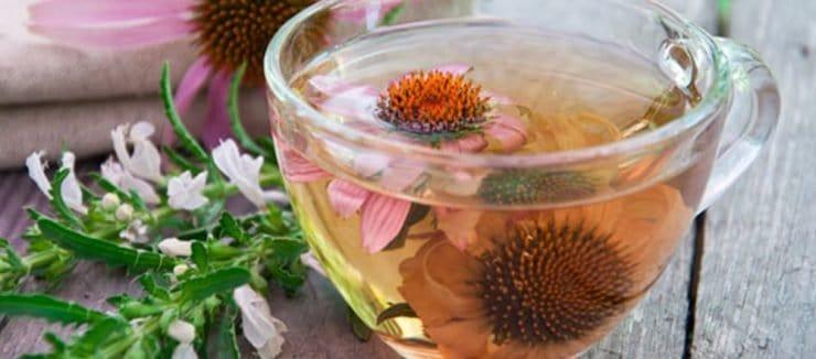 Echinacea Tea Immune System