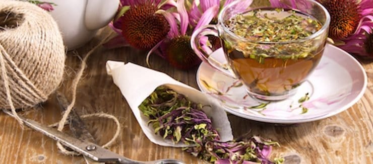 Echinacea Tea Side Effects