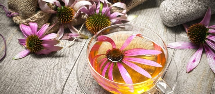 Echinacea Tea for Colds