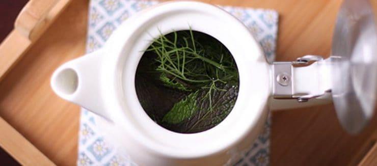 Fennel Tea Pregnancy