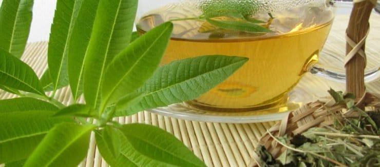 Is Lemon Verbena a Diuretic?