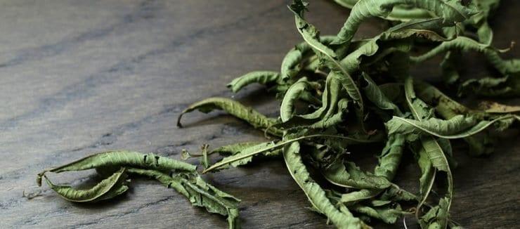 Lemon Verbena Benefits