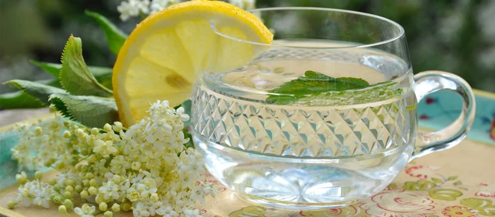 Elderflower Tea Benefits and Side Effects