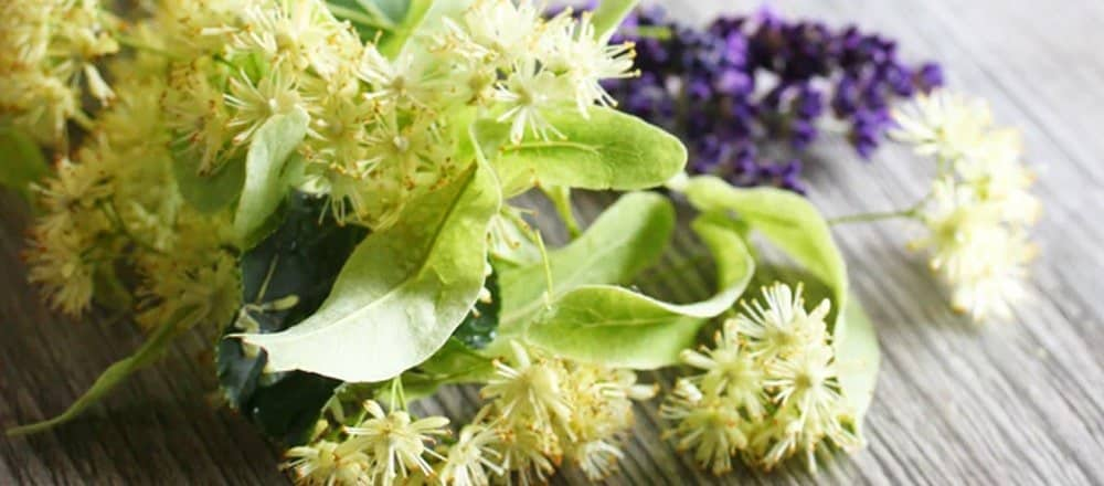 Linden Tea Benefits and Side Effects