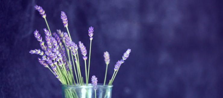 Does Lavender Tea Make You Sleepy?