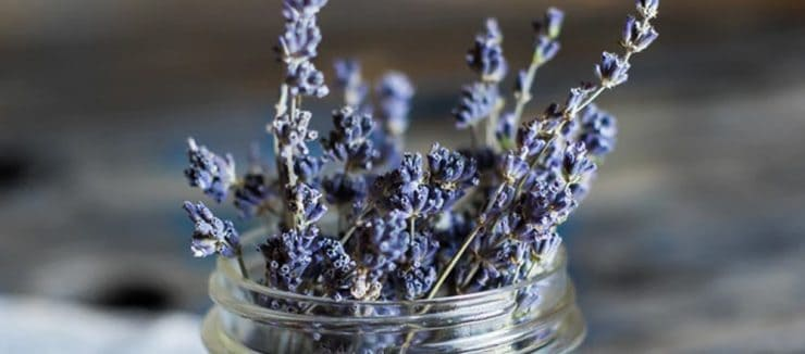 Is Lavender Tea Caffeine Free?