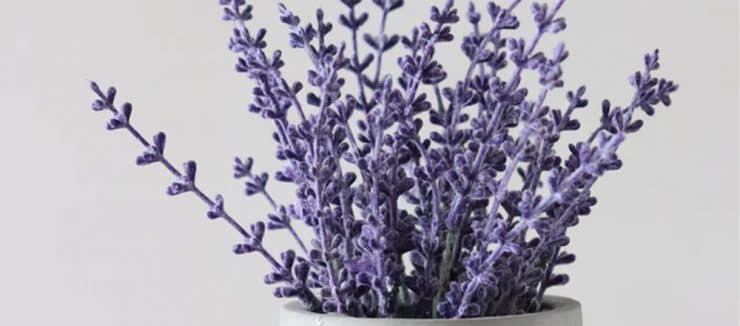 Lavender Tea for Weight Loss