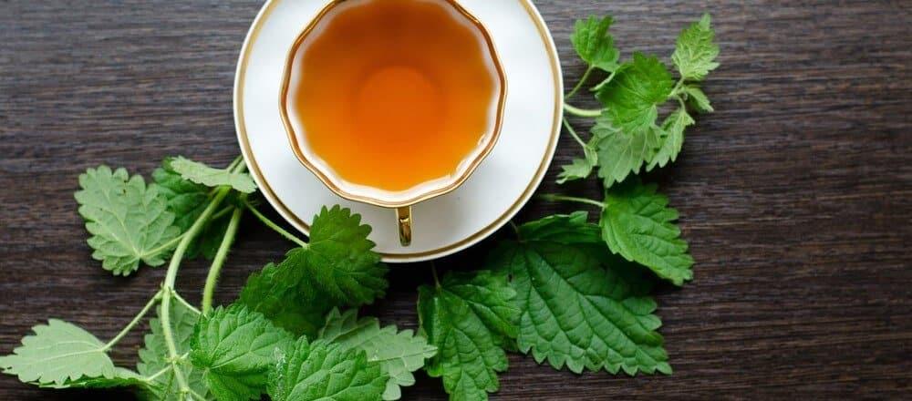 Nettle Tea Benefits & Side Effects
