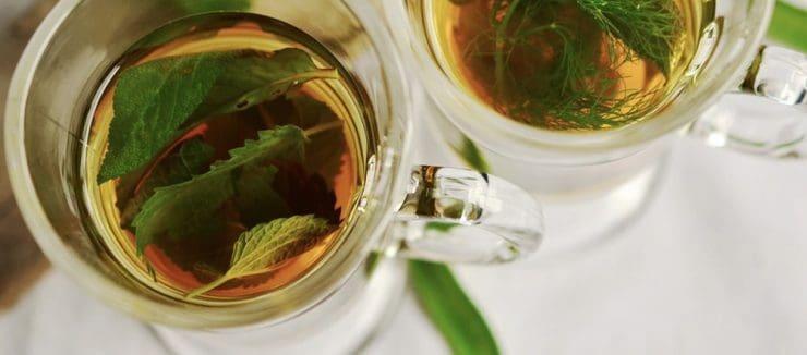 Nettle Tea Benefits for Acne