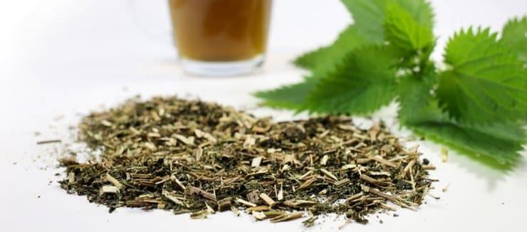 Nettle Tea for Colds