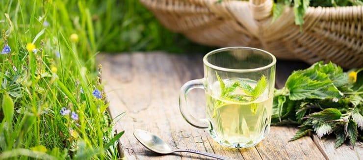 Nettle Tea for Hair Loss