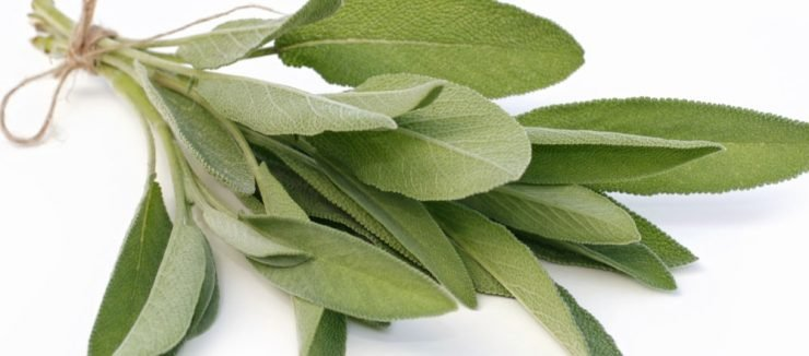 Sage Tea for Anxiety