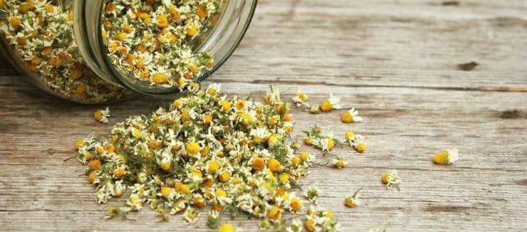 Camomile Tea Benefits for Skin Health