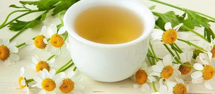 Camomile Tea Side Effects