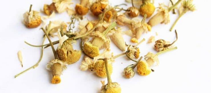 How to Make Camomile Tea