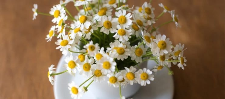 What is Camomile Tea